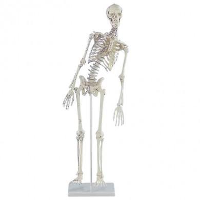 "Squelette miniature ""Fred"""