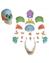 Crâne désarticulable
